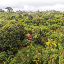 Aerial view of an agroforestry operation