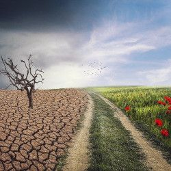 Drought landscape divided by road from healthy landscape