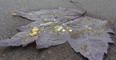 brown autumn leaf covered in yellow droplets of herbicide