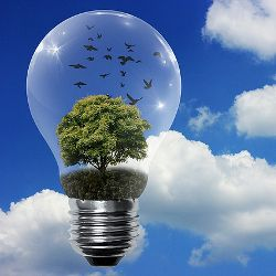 incandescent light bulb against a blue cloudy sky with a green tree and black birds inside