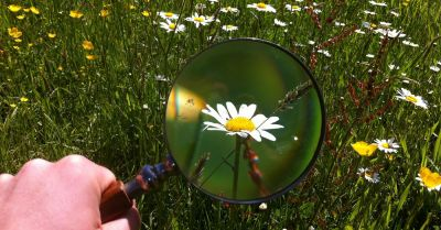 Meadow full of wildflowers being magnified by a magnifying glass
