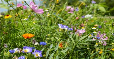 colorful flowers and herbs in a meadow