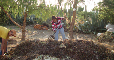 Compost at a farm in Mexico.