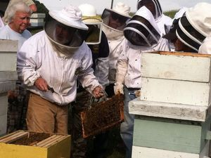 Beekeeping school aims to pollinate interest in field