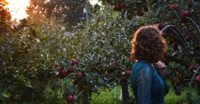 woman walking through an apple orchard at sunset
