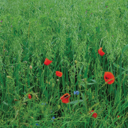 grass and red flowers