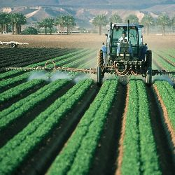 Farmer spraying from a tractor among crop rows