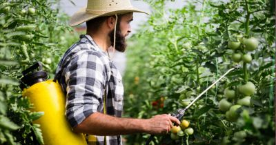 man in a flannel shirt and straw hat spraying tomato plants with pesticides in a large yellow tank on his back