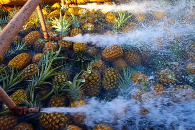 Pineapple pesticide linked to Parkinson's disease
