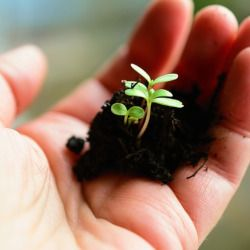 hand holding a pile of soil with a small green seedling growing