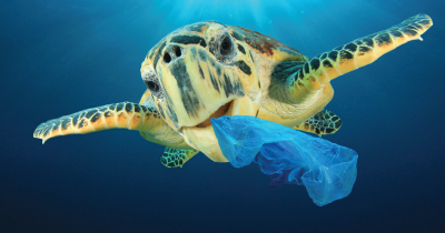 Turtle with plastic bag in mouth.