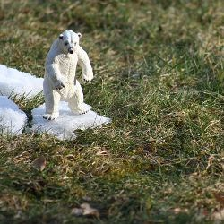 toy polar bear on melting chunk of snow in the grass