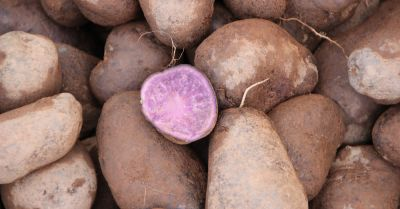 cut purple potatoes