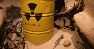 sandy environment with a lizard and a large yellow barrel marked radioactive