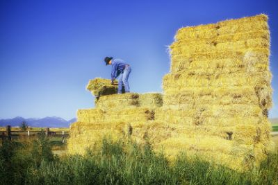 Farm worker baling hay in Oregon