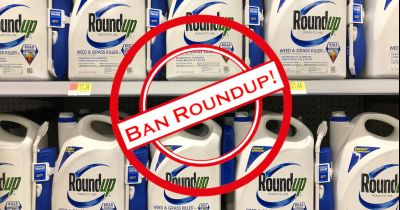 red rubber stamp that says Ban Roundup over a store shelf of blue bottles of Monsantos glyphosate herbicide Roundup