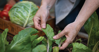 Person touching vegetables