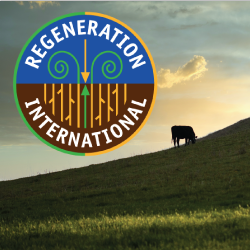 regeneration international logo and pasture with cow