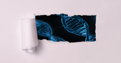 dna genes visible through a ripped hole in paper
