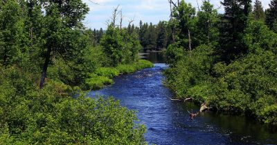river flowing through a forest landscape in Minnesota
