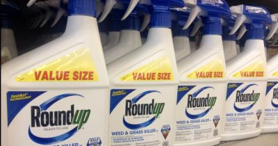 blue and white spray bottles of Monsantos Roundup herbicide on a store shelf