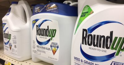 blue and white bottles of Monsantos Roundup herbicide on a store shelf