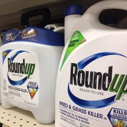 white and blue bottles of Monsantos glyphosate herbicide Roundup on a store shelf