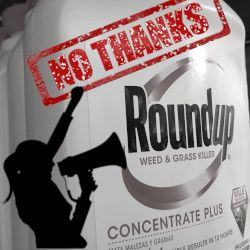 black and white bottle of Monsantos ROUNDUP herbicide with silhouette of protester with megaphone and red stamp that states NO THANKS