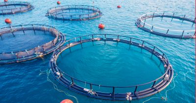rings of a factory fish farm in the ocean