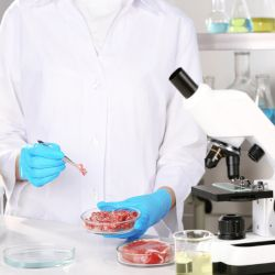 scientist with a blue gloved hand holding a petri dish containing lab grown meat