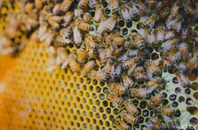 Seattle Urban Beekeeping Builds a Buzz