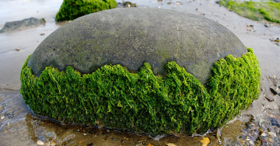 A rock laying on a beach with seaweed covering it