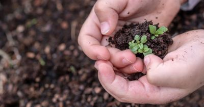 childs hands holding a small green seedling plant