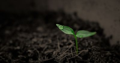 small green seedling in a pot of soil with a single raindrop