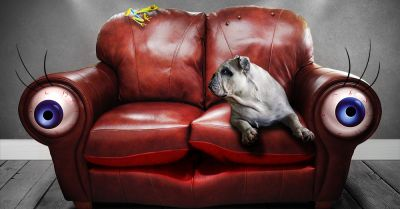 dog and frog sitting on a sofa that has eyes