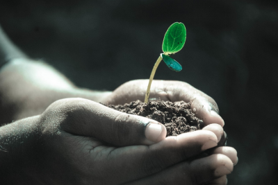 child's hands holding sprout in soil