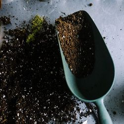 potting soil near a gardening trowel