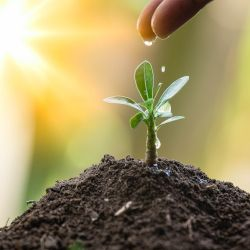 mound of soil with a small green seedling and a hand dropping water in bright sunlight