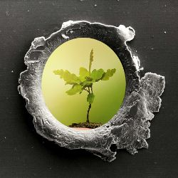 bullet hole in a piece of metal revealing a small green seedling plant