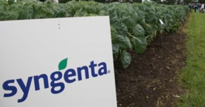 Syngentas logo on a crop field in a farm