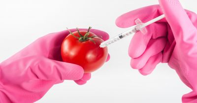 gloved hands injecting a tomato with a syringe