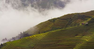 terraced rice farm crop field