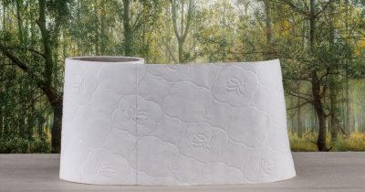 roll of toilet paper on a beige surface in front of a forest landscape