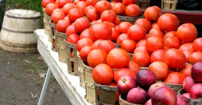 tomatoes and apples in baskets and bushels at a farmers market