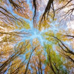 canopy of trees in a forest on a blue sky