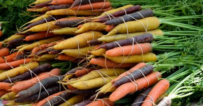 pile of multicolored carrots