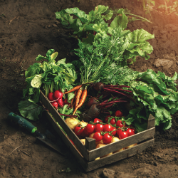A crate of vegetables with a background of soil
