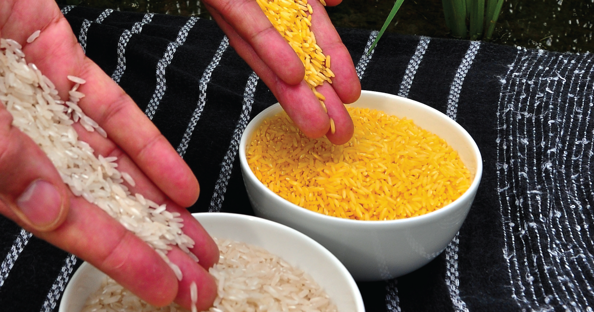 Why We Oppose Golden Rice