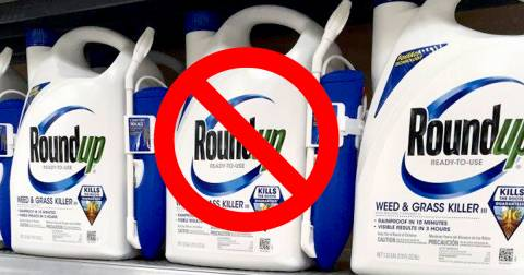 blue and white bottles of Monsantos Roundup herbicide on a store shelf with a red circle and slash through them