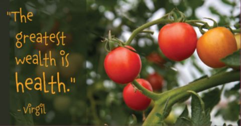 tomato plants growing red ripe vegetables and the quote from poet Virgil THE GREATEST WEALTH IS HEALTH
